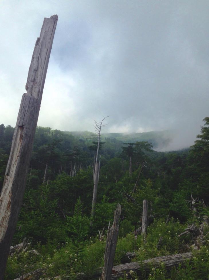 立枯れの森