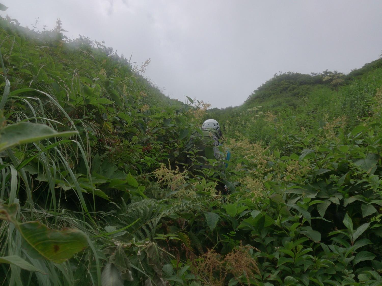 稜線への最後の藪漕ぎ