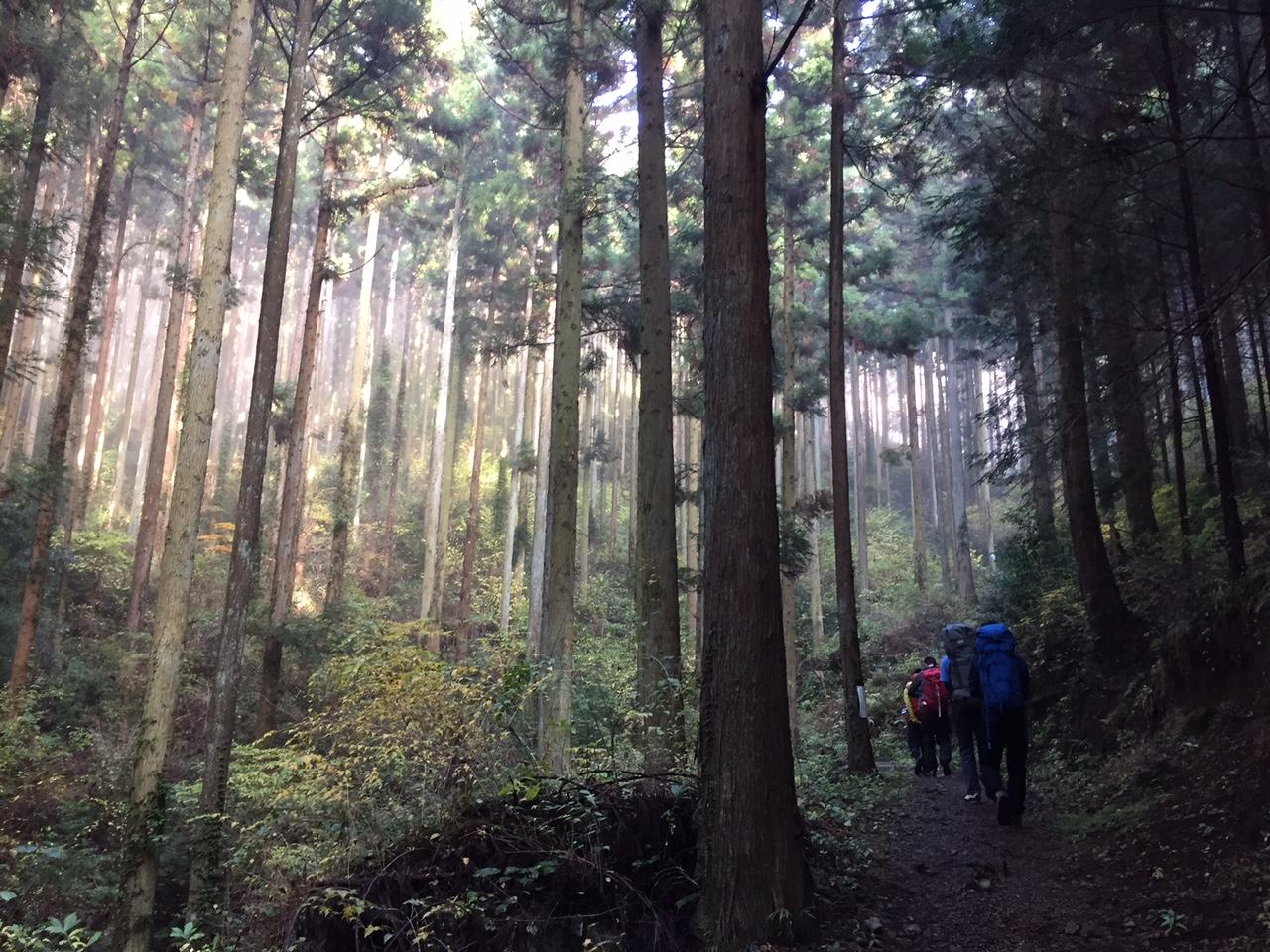 クライミング地点までの林道。神秘的な情景にこころが自然にもどります。